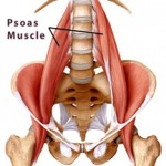 psoas_muscle_for_web